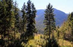 Lot A Creighton Valley Road, Lumby, BC
